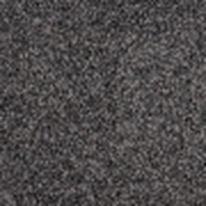 Paua 0260